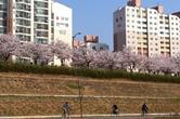 부부싸움 뒤끝, 봄꽃이 녹였다