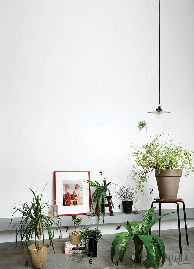 꽃보다 식물 그린 라이프로의 변화
